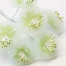 Apple Green Organza Summer Blossoms x6